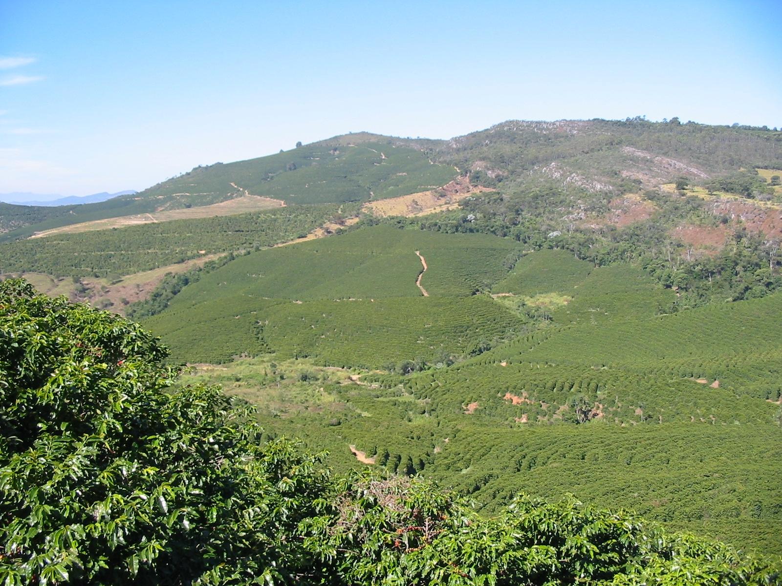 Illycafé Kaffeeplantage Brasilien